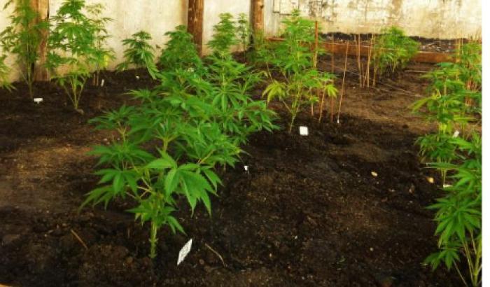 Curso Cannabis en el Jardín Botánico